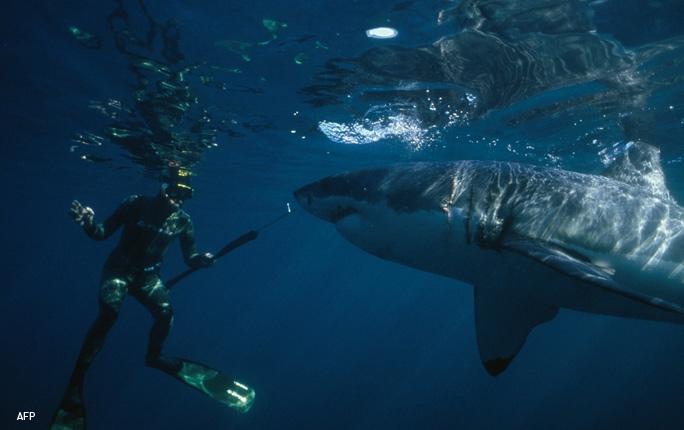 El hipnotizador de tiburones