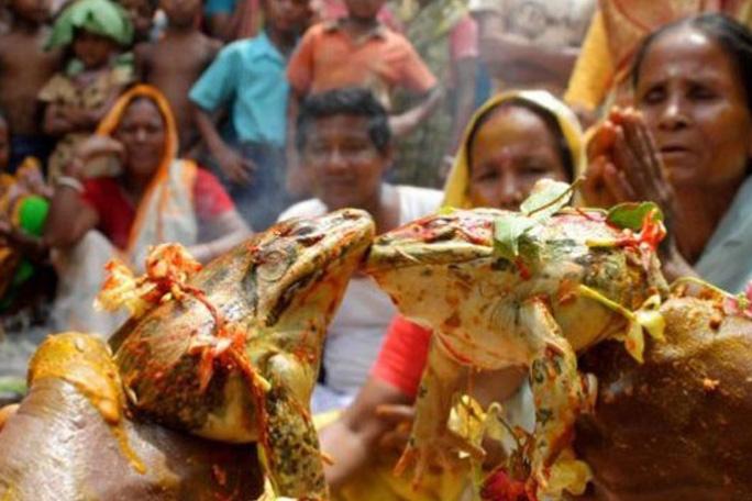 Casan sapos en la India