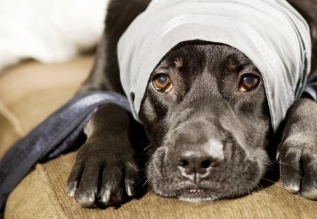 Cancer en las mascotas