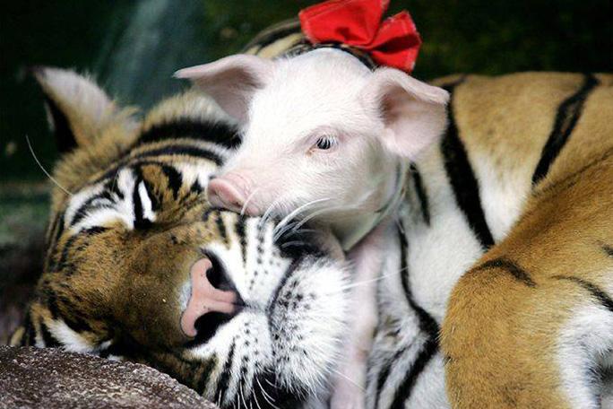 Animales que adoptan