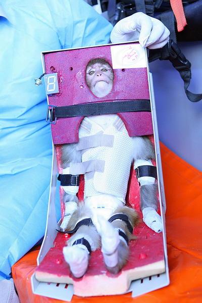 mico al espacio por Iran