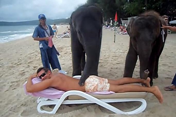 Elefantes da masaje a turista en la playa,kienyke