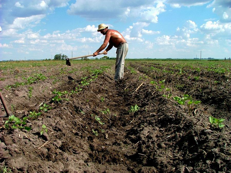 Agricultura, Kienyke