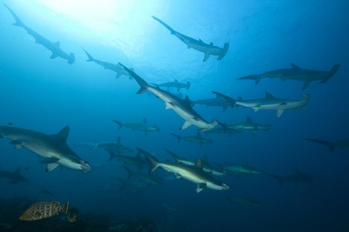¿Cómo se preservan los tiburones en Colombia?