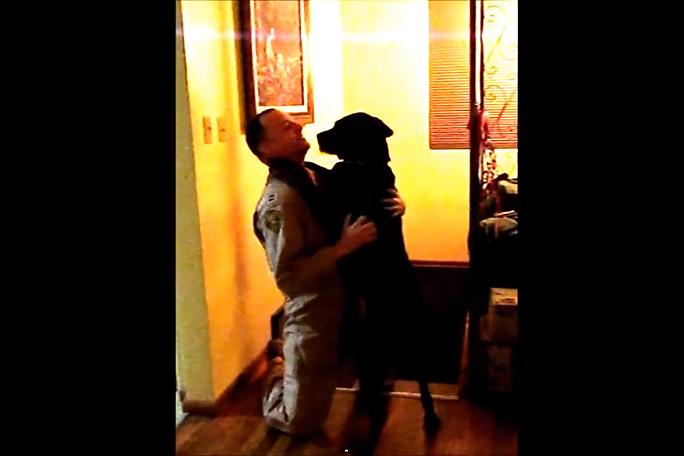 Perro, amigo fiel, kienyke