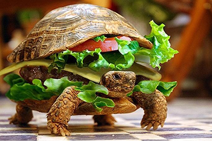 Hombre trata de viajar con su tortuga escondida en una hamburguesa