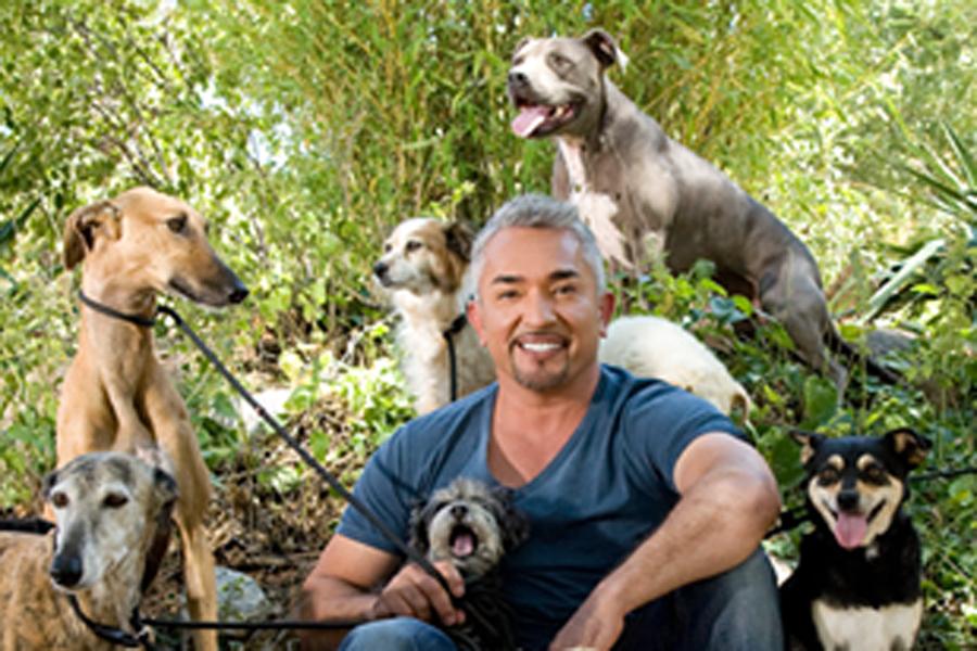 Cesar Millan, encantador de perros, kienyke
