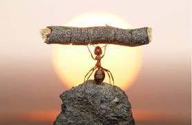 ¿Usted conoce el poder de la resiliencia?  Aquí le cuento