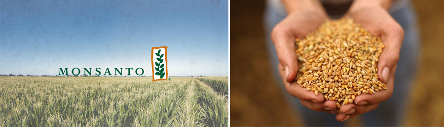 Monsanto, Semillas, Kienyke