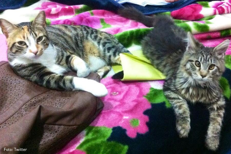 Gatos-rescatados-Medellín-ok