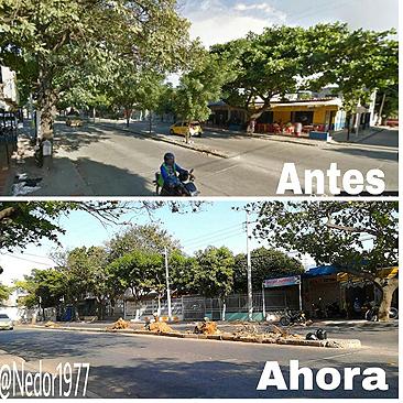 Arboricidio en Santa Marta