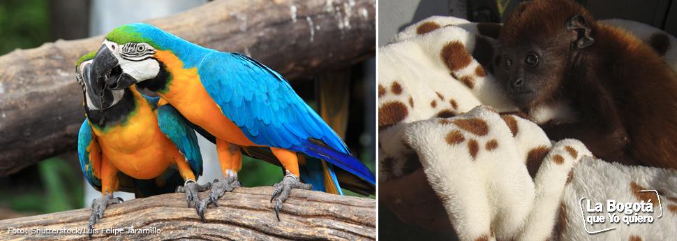 ¿Cómo salvarle la vida a un animal silvestre, si se lo encuentra en Bogotá?