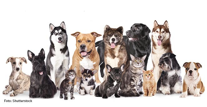 EPS para mascotas P