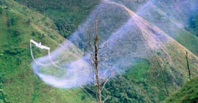 Colombia no se va inundar de coca por suspensión de glifosato: ONU