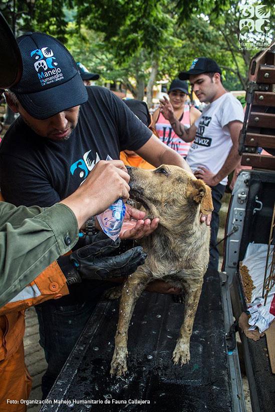 Heroes de mascotas animales