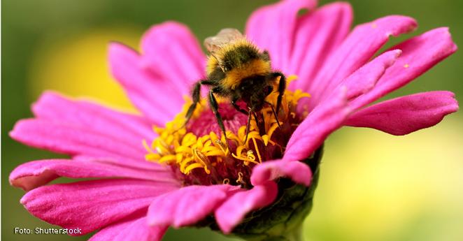 Defensores de las abejas piden menos uso de agroquímicos