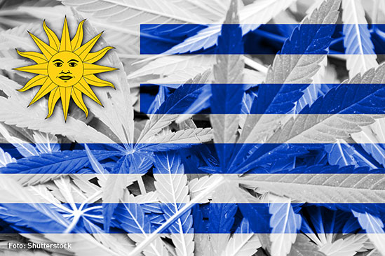 Marihuna Uruguay-1