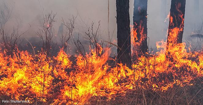 Incendios generan emergencias en Cundinamarca, Boyacá y Antioquia