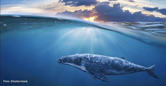 Las ballenas son dioses en Vietnam