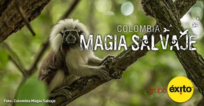 Colombia Magia Salvaje ahora en Netflix