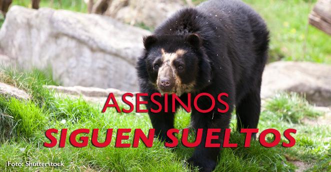 Autoridades advierten que más osos pueden ser asesinados