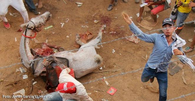 Apedrean a fotógrafo que registraba violencia animal en corralejas