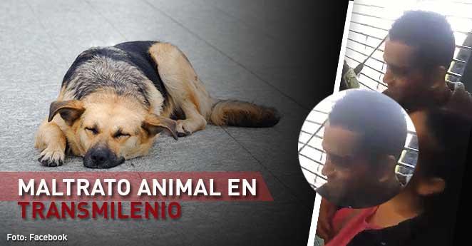 maltrato animal. maltrato en transmilenio, bogota animalista, hombre atropella perro, perro asesinado por un transmilenio