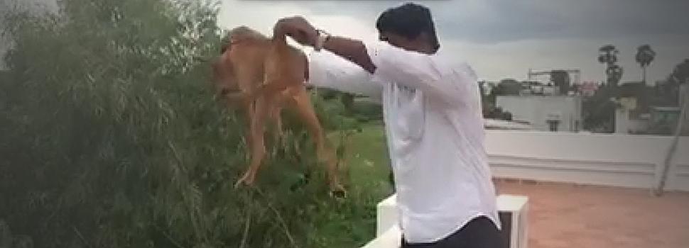 Video impactante, un hombre lanza a un perro desde una terraza