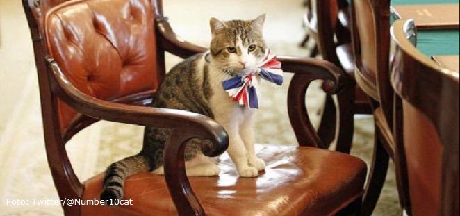David Cameron sale de su cargo pero su gato Larry se queda