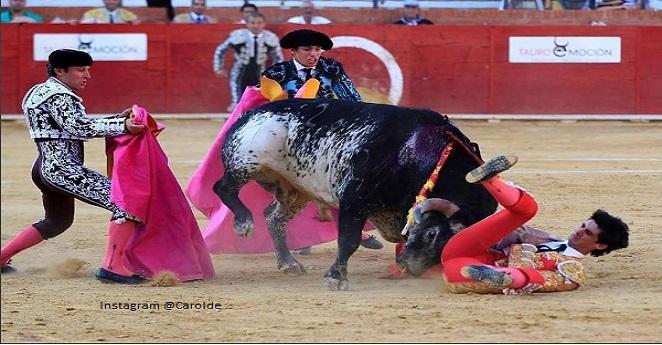 ¿Tradición macabra? Asesinar a la mamá del toro que mata a un torero