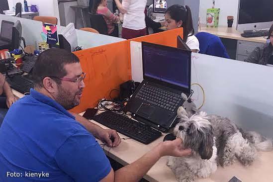 Alt_trabajo_con_mascotas-01