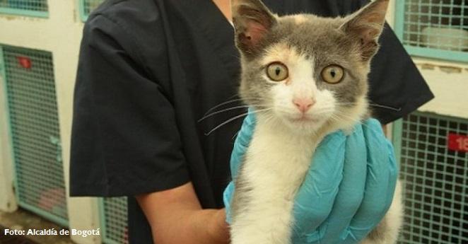 Animales de la calle cuentan con servicios de urgencias en Bogotá