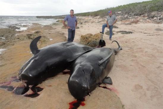 ballenas c