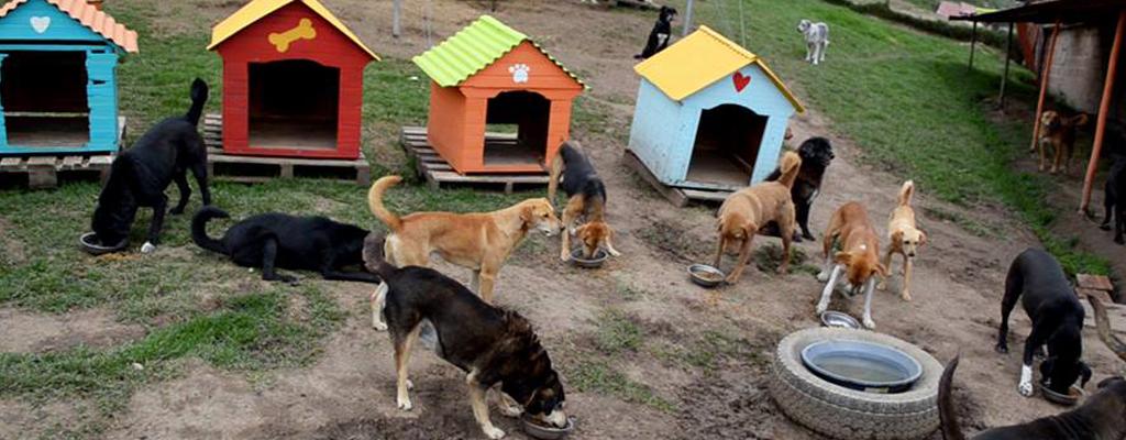 Fundacion-de-animales-contenido
