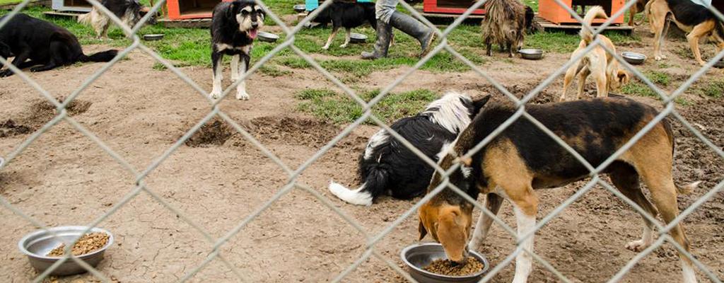animales fundación tabio perros callejeros