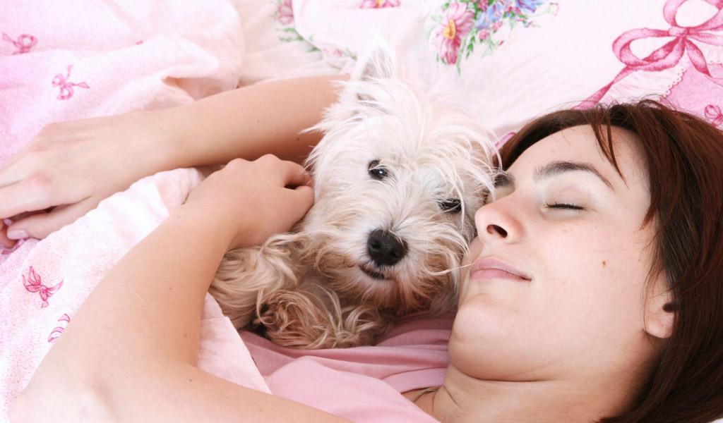 Enfermedades frecuentes en perros ancianos