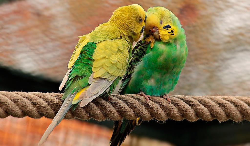 Lo que se hace con los animales silvestres hallados en Bogotá