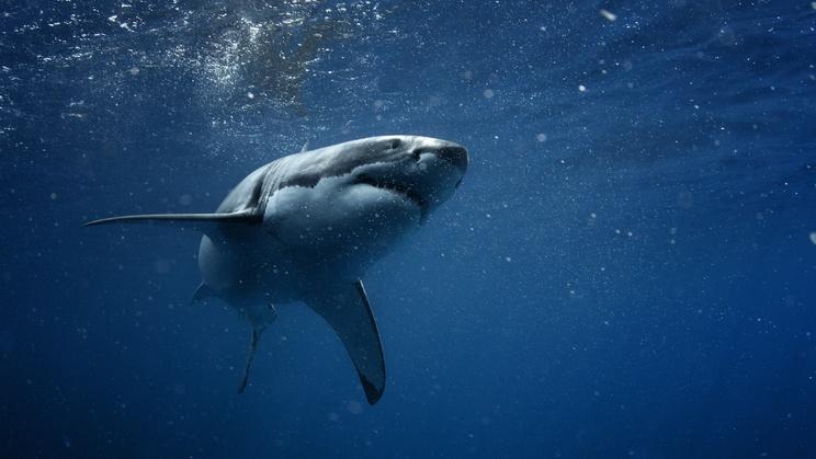 Brazalete para evitar la mordida de un tiburón
