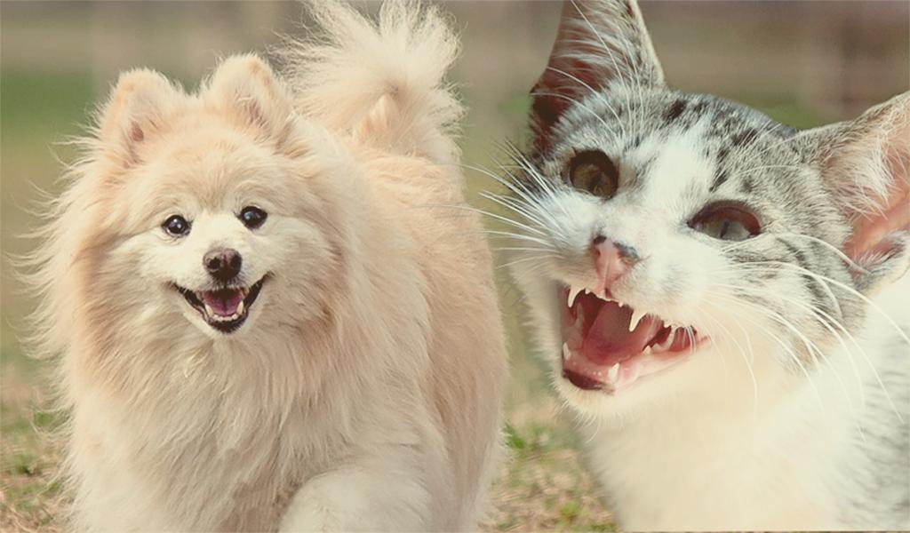 Tips para una buena salud dental de las mascotas