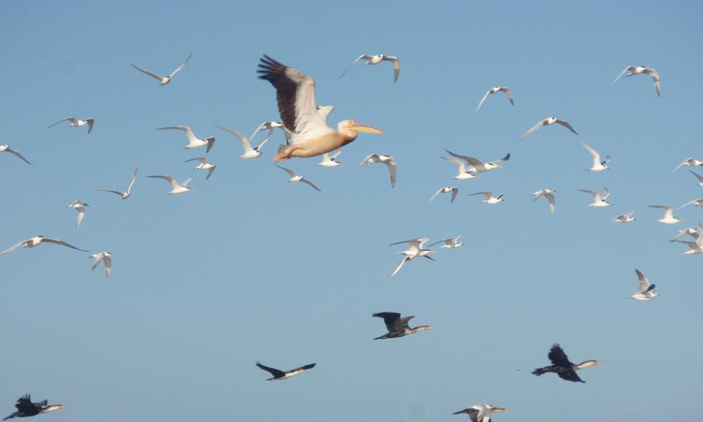 Colombia gana competencia de avistamiento de aves