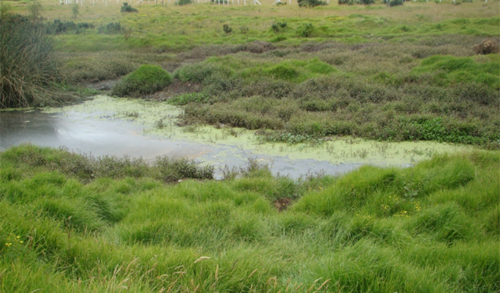 Humedal Capellanía