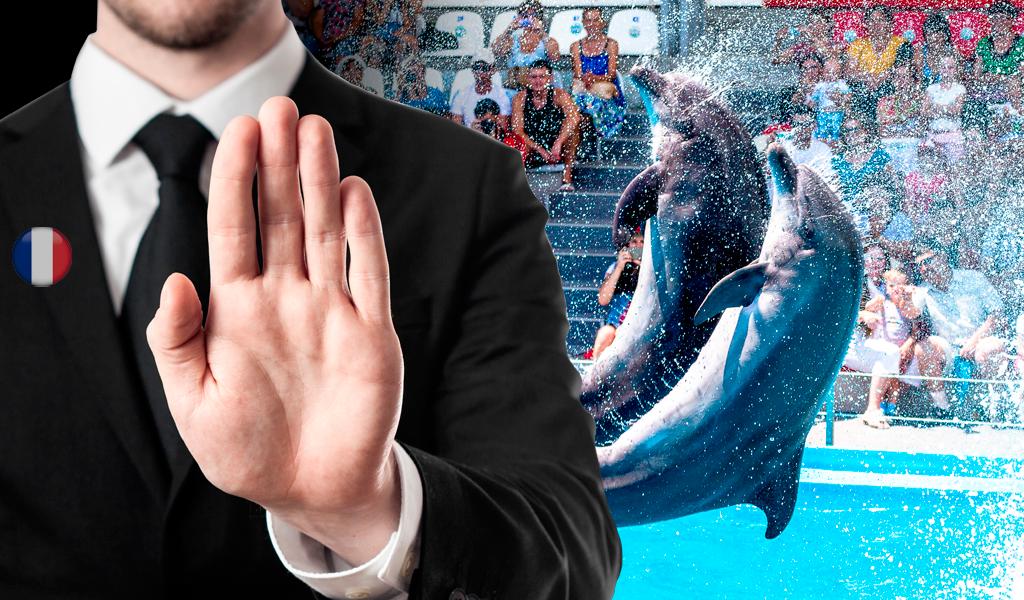 Francia prohíbe la tenencia de orcas y delfines en cautiverio