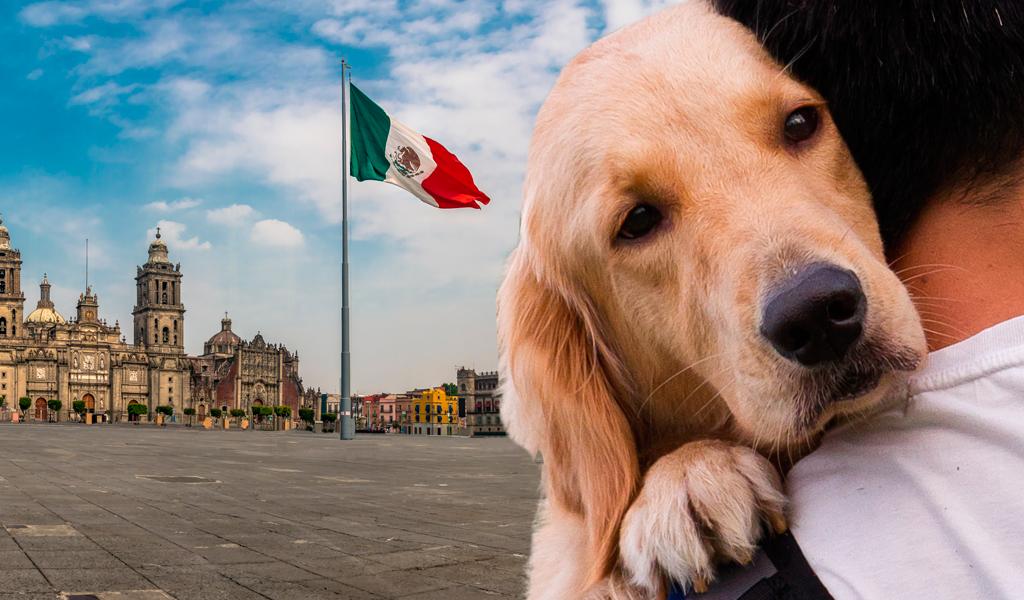 México creará agencia de protección animal