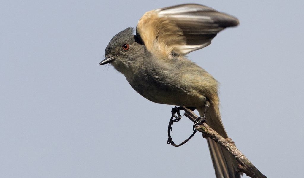 Las aves que volvieron a habitar Medellín