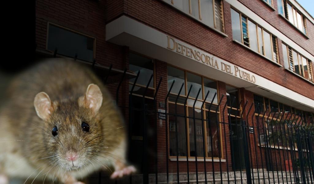 Denuncian roedores en la Defensoría del Pueblo