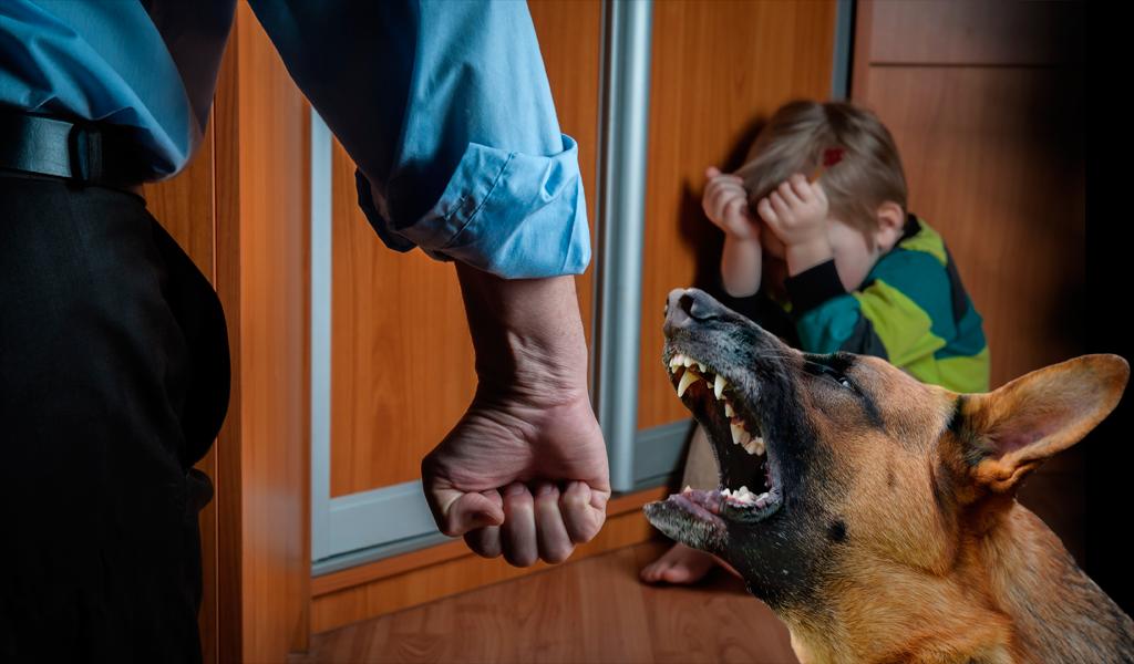 Los perros reaccionan ante las injusticias