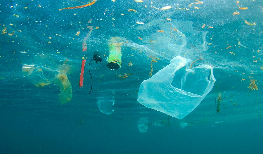 Contaminación de océanos pone en peligro seguridad alimentaria