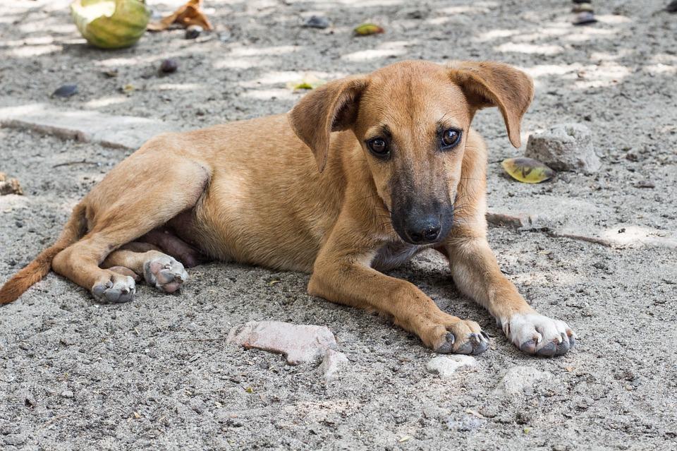 Holanda, primer país sin perros callejeros