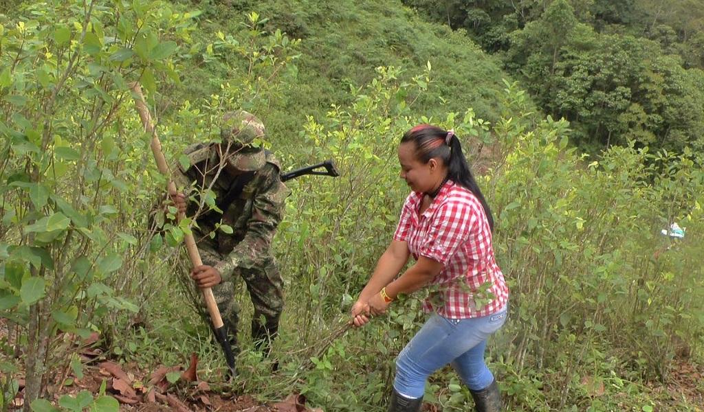 Erradicado el 62% de 50 mil hectáreas de cultivos ilícitos