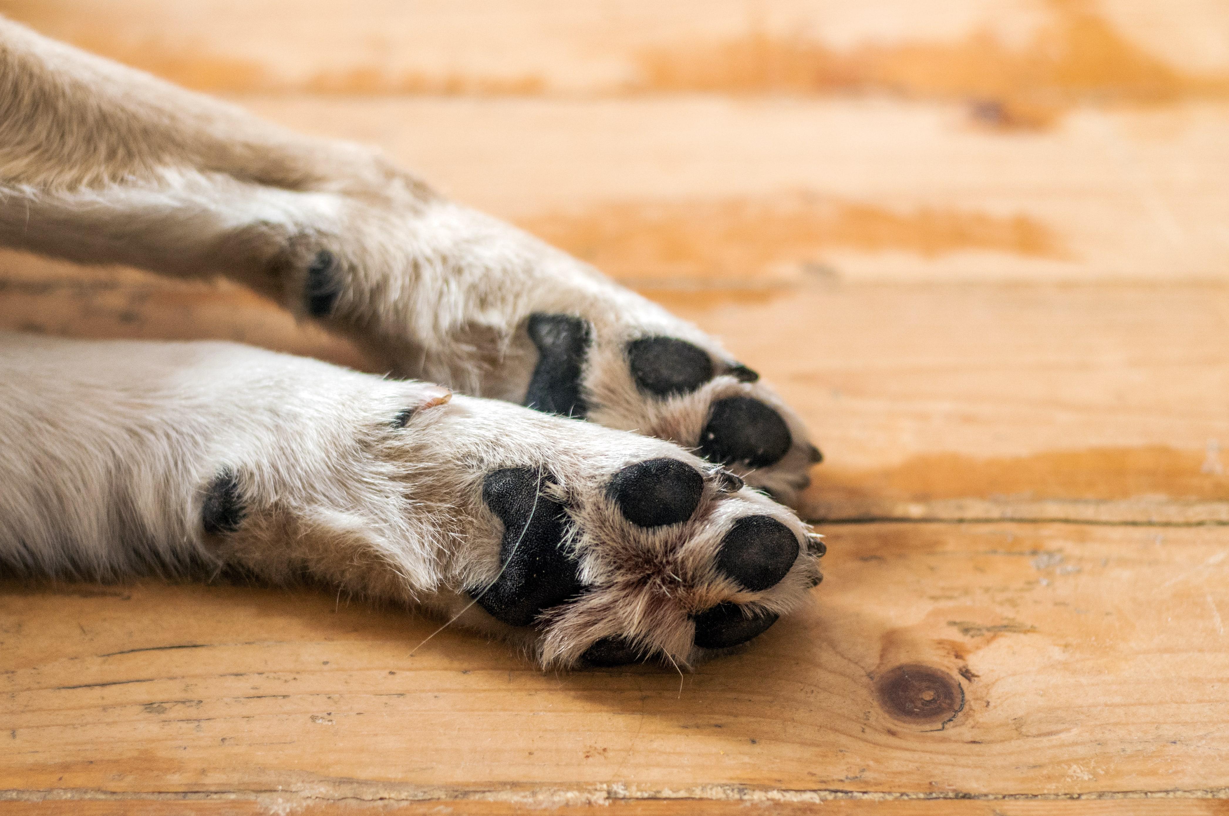 Indignación por asesinato de un perro en Bogotá
